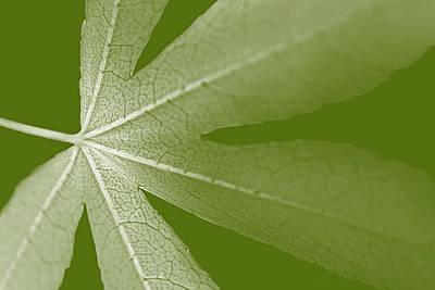 Photograph - Leaf Macro Light Green  by Jennie Marie Schell