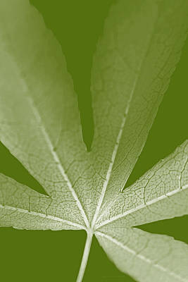 Photograph - Leaf Macro Light Green Vertical by Jennie Marie Schell