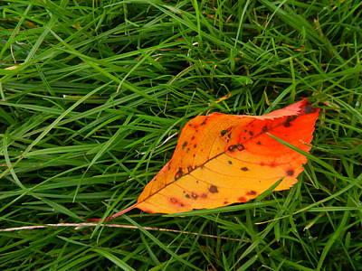 Photograph - Leaf by Nik Watt
