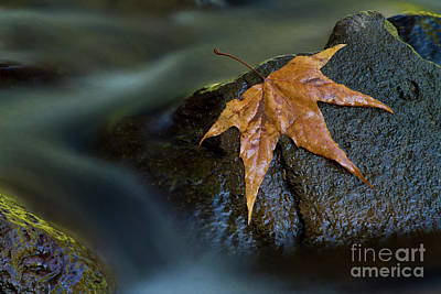 Photograph - Leaf On A Rock by Bryan Keil