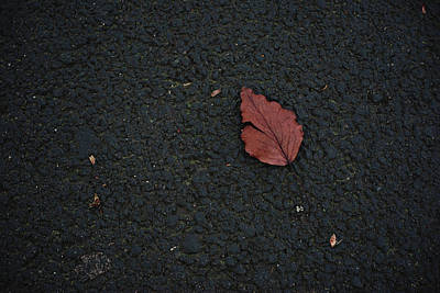 Photograph - Leaf On Asphalt by John Rossman