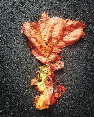 Digital Art - Leaf On Asphalt by Olivier Calas