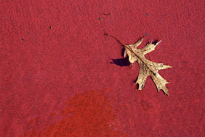 Photograph - Leaf On Basketball Court by Mary Bedy