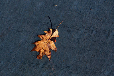 Photograph - Leaf On Blue Pavement by Mary Bedy