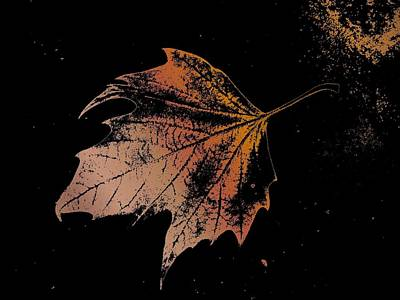 Leaf On Bricks Art Print by Tim Allen