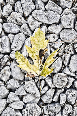 Photograph - Leaf On Gravel by Sharon Popek