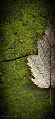 Photograph - Leaf On Green Wood by Henri Irizarri