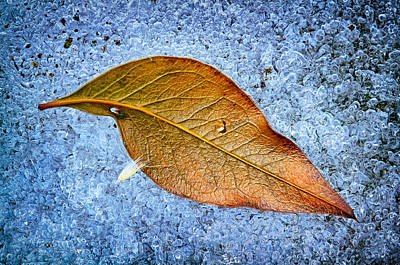Photograph - Leaf On Ice by Carolyn Derstine