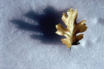 Abstract Digital Photograph - Leaf On Snow by Paul Wear