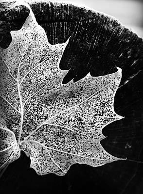Photograph - Leaf On Log In Black And White High Contrast by Kelly Hazel