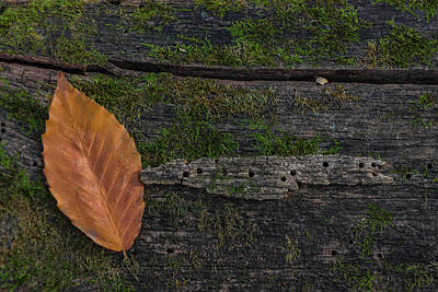 Photograph - Leaf On Log  by Pravin Sitaraman