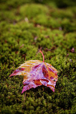 Photograph - Leaf On Moss by Benjamin Dahl