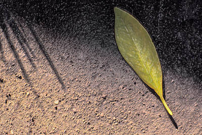 Photograph - Leaf On Street by Mark Holcomb