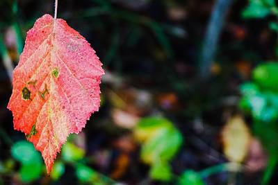 Photograph - Leaf On The Left In Fall - Assiniboine Forest by Desmond Raymond