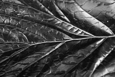 Photograph - Leaf On The Wind by Jason Moynihan