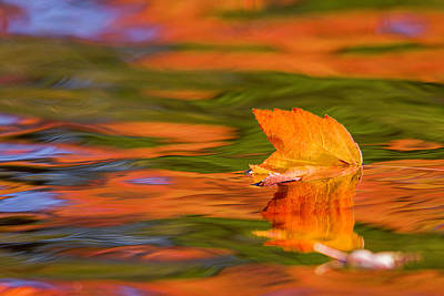 Photograph - Leaf On Water by Benjamin Dahl