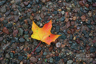Photograph - Leaf On Wet Gravel by Kevin McCarthy