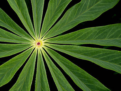 Photograph - Leaf Pattern by Jean Noren