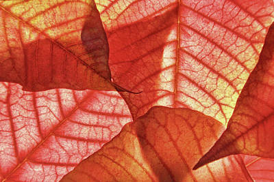Photograph - Leaf Patterns II by Leda Robertson
