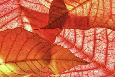 Photograph - Leaf Patterns 3 by Leda Robertson