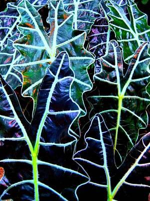 Leaf Patterns Original