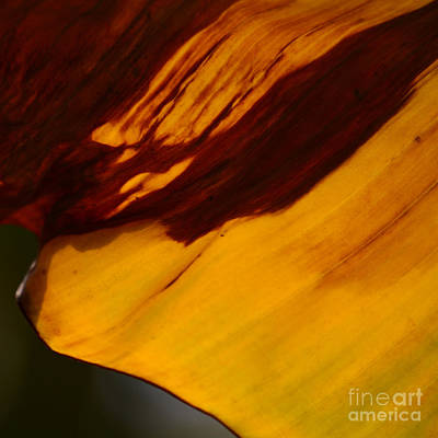Photograph - Leaf by Paul Davenport