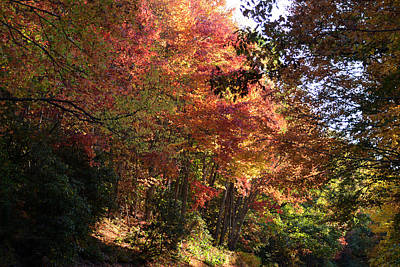 Photograph - Leaf Peeping Along The Blue Ridge Parkway In North Carolina by rd Erickson