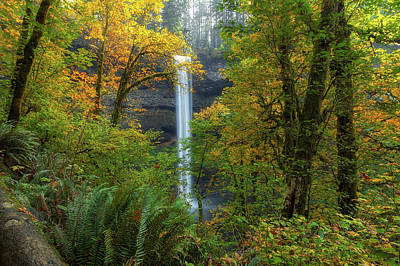 Leaf Peeping And Waterfall Art Print by David Gn