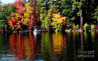 Photograph - Leaf Peeping by Mary Capriole