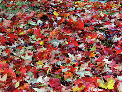 Photograph - Leaf Pile by Jamie Johnson