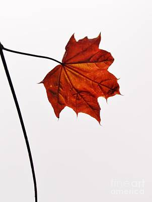 Photograph - Leaf by Richard Brookes