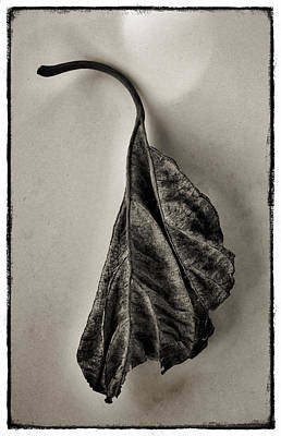 Textured Photograph - Leaf by Robert Brown