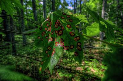 Digital Art - Leaf Rust by Patrick Groleau