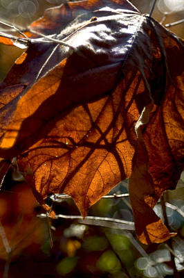 Photograph - Leaf by Sara Stevenson