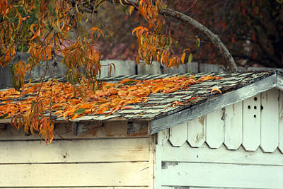 Photograph - Leaf Shed by Holly Ethan