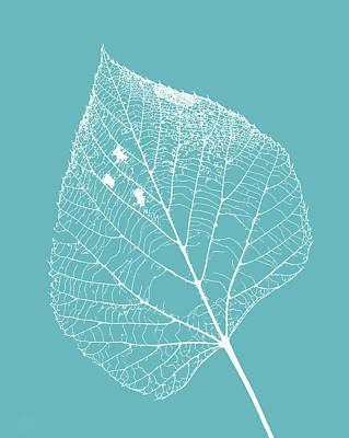 Photograph - Leaf Skeleton On Blue by Carolyn Derstine