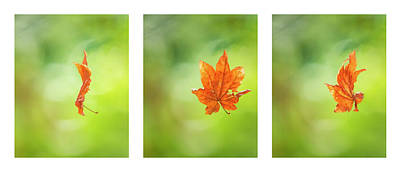 Photograph - Leaf Spinning On A Spider's Silken Thread Triptych by Belinda Greb