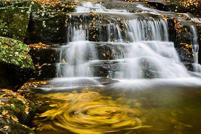 Beauty Photograph - Leaf Spiral by Oscar Gutierrez