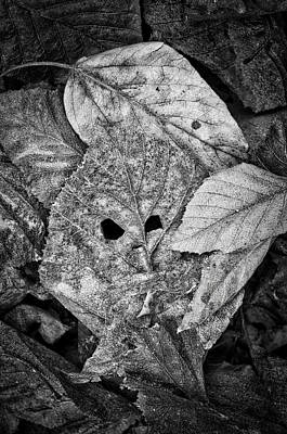 Photograph - Leaf Sprite - Monochrome by Cathy Mahnke