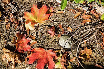 Photograph - Leaf, Stone, And Twig by Tom Cochran