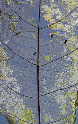 Photograph - Leaf Structure by Debbie Cundy