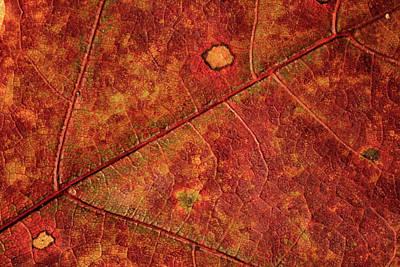 Photograph - Leaf Study 11 by Marzena Grabczynska Lorenc