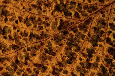 Photograph - Leaf Study 2 by Marzena Grabczynska Lorenc