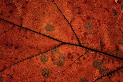 Photograph - Leaf Study 3 by Marzena Grabczynska Lorenc