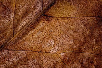 Photograph - Leaf Study 4 by Marzena Grabczynska Lorenc