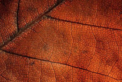 Photograph - Leaf Study 5 by Marzena Grabczynska Lorenc