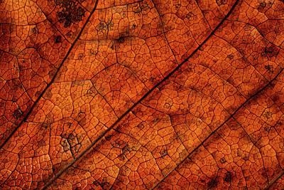 Photograph - Leaf Study 7 by Marzena Grabczynska Lorenc