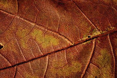 Photograph - Leaf Study 9 by Marzena Grabczynska Lorenc
