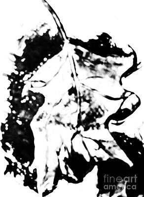 Leaf Study Black And White Art Print by Jamey Balester