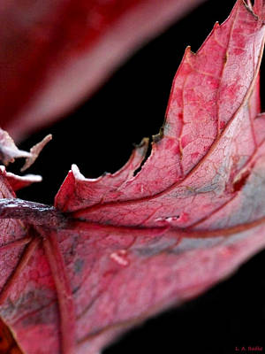 Photograph - Leaf Study I by Lauren Radke